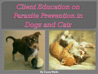 Client Education on Parasite Prevention in Dogs and Cats
