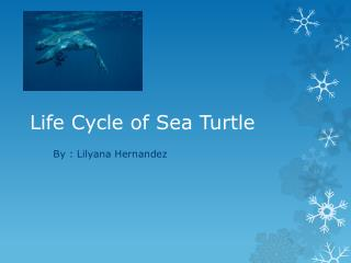 Life Cycle of Sea Turtle