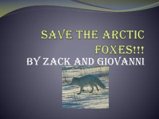 Save the Arctic Foxes!!!