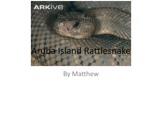 Aruba  I sland Rattlesnake