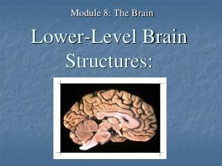 Lower-Level Brain Structures: