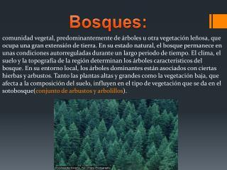 Bosques:
