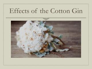 Effects of the Cotton Gin