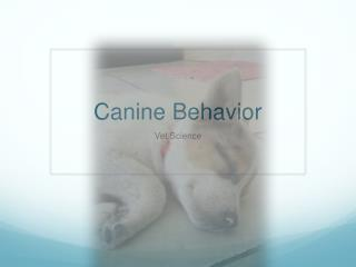 Canine Behavior