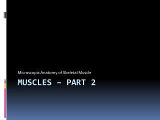 Muscles – Part 2