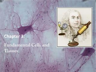 Chapter 3:  Fundamental Cells and Tissues