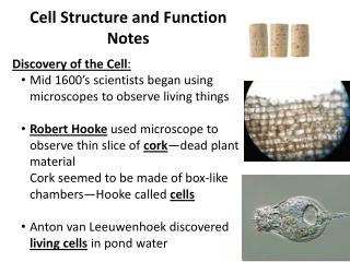 Cell Structure and Function Notes Discovery of the Cell :