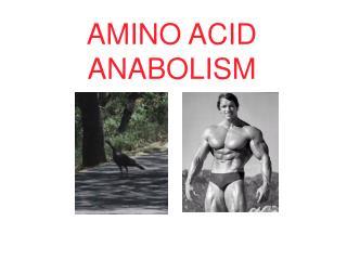 AMINO ACID ANABOLISM