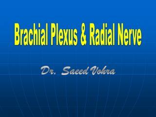Brachial Plexus & Radial Nerve