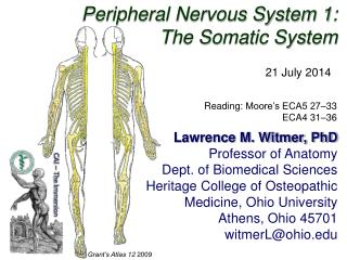 Peripheral Nervous System 1: The Somatic System