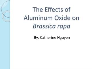 The Effects of  Aluminum Oxide on  Brassica rapa