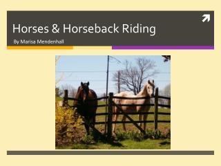 Horses & Horseback Riding