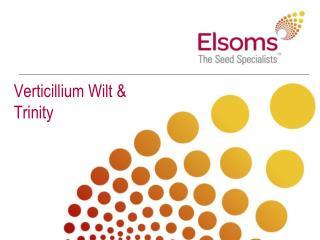 Verticillium Wilt & Trinity