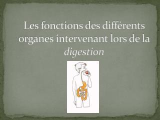 Les fonctions des différents organes intervenant lors de la  digestion