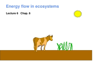 Lecture 2   Ecology Ecosystems Energy Flow