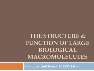 The structure & function of large biological macromolecules