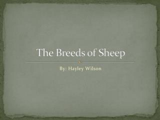 The Breeds of Sheep