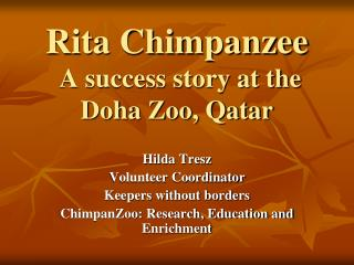 Rita Chimpanzee  A success story at the Doha Zoo, Qatar