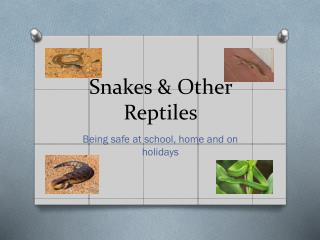 Snakes & Other Reptiles
