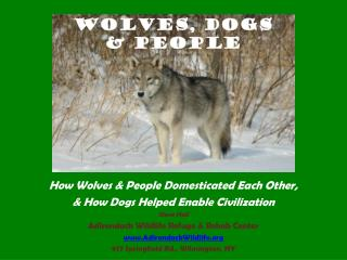 How Wolves & People Domesticated Each Other, & How Dogs Helped Enable Civilization Steve Hall
