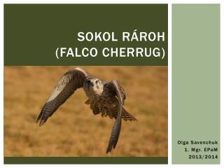 Sokol rároh  (F alco cherrug )