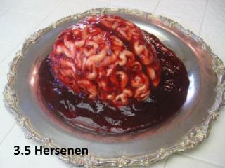 3.5 Hersenen