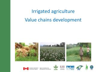 Irrigated agriculture  Value chains development
