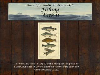 Bound for South Australia 1836 Fishing  Week 11
