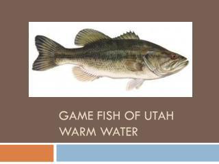 Game fish of Utah Warm Water