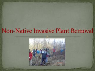 Non-Native Invasive Plant Removal