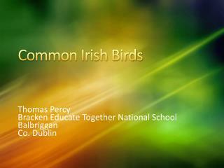 Common Irish Birds