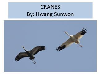 CRANES By: Hwang  Sunwon