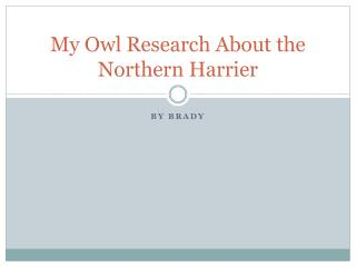 My Owl Research About the Northern Harrier