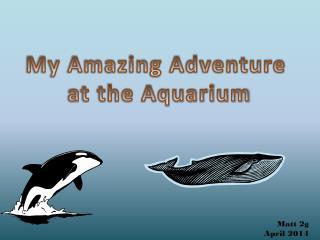 My Amazing Adventure  at the Aquarium