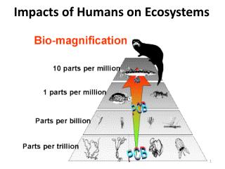 Impacts of Humans on Ecosystems