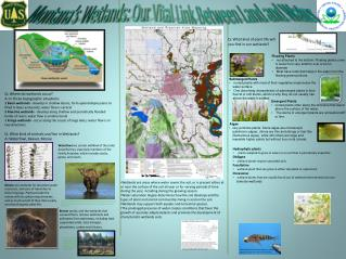 Montana's Wetlands: Our Vital Link Between Land and Water