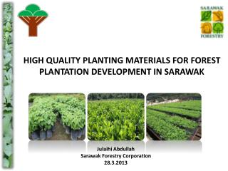 HIGH QUALITY PLANTING MATERIALS FOR FOREST PLANTATION DEVELOPMENT IN SARAWAK