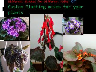 Different Strokes for Different Folks or Custom Planting mixes for your plants
