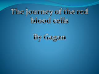 The journey of the red blood cells