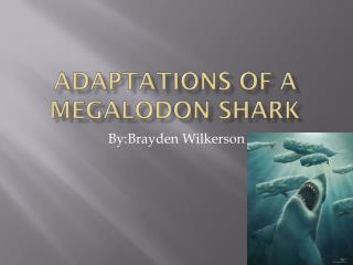 Adaptations of a  M egalodon  shark