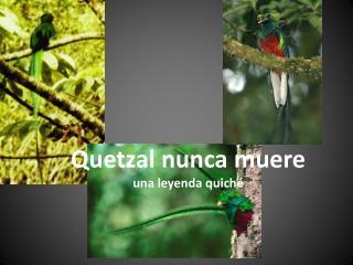 Quetzal  nunca muere una leyenda quiché