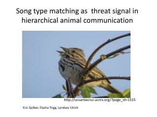 Song type matching as  threat signal in hierarchical animal communication