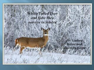 White-Tailed Deer and How they survive in winter