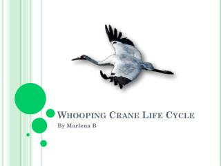 Whooping Crane Life Cycle