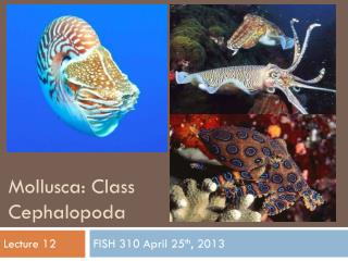 Mollusca: Class  Cephalopoda