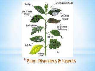 Plant Disorders & Insects
