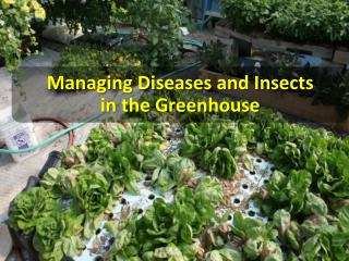 Managing  Diseases and Insects   in the Greenhouse
