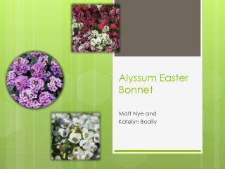 Alyssum Easter Bonnet