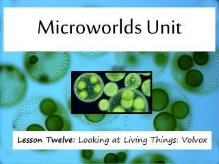 Microworlds Unit