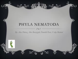 Phyla  Nematoda
